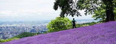 Horomi Pass Lavender Garden