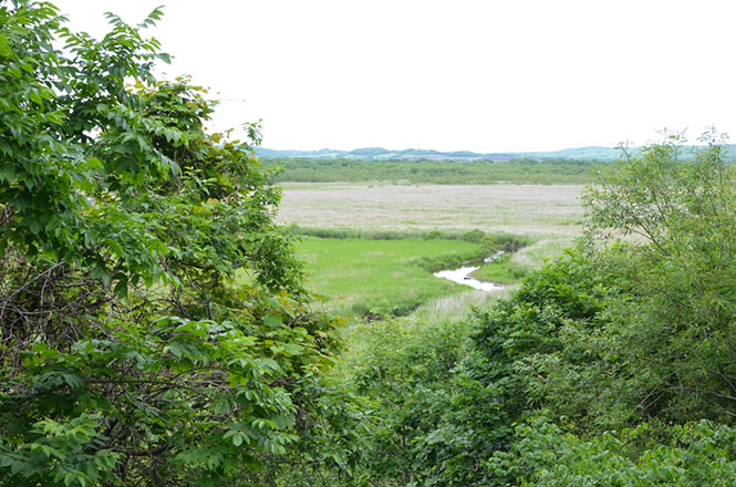 Kottaro Marsh in Shibecha