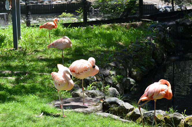 Asahiyama Zoo Totori Village and Flamingo