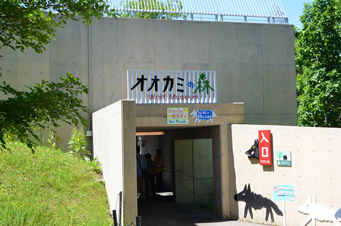 Asahiyama Zoo Forest of Wolf