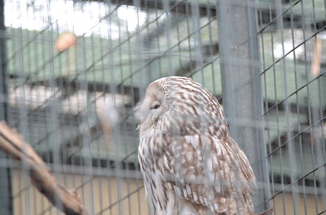 Maruyama Zoo Forest of Owl and Hawk