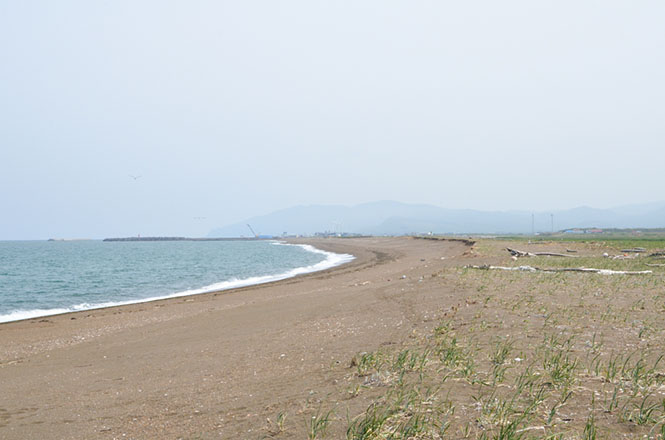 Beniya Primitive Flower Garden, North Okhotsk Prefectural Natural Park, Hamatonbetsu
