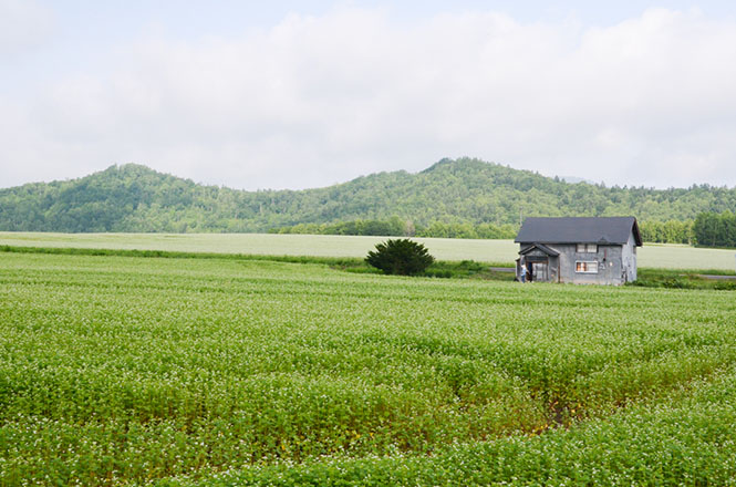 Shirojutan-no-Hatake(Silver White Carpet Fields) in Horokanai
