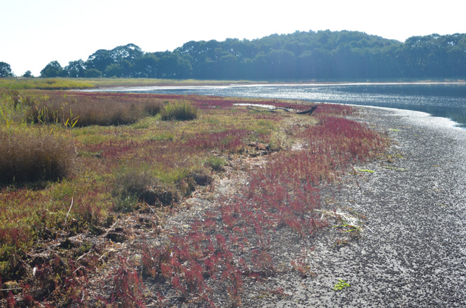 Coral Grass Colony of Cape Sango along Lake Saroma