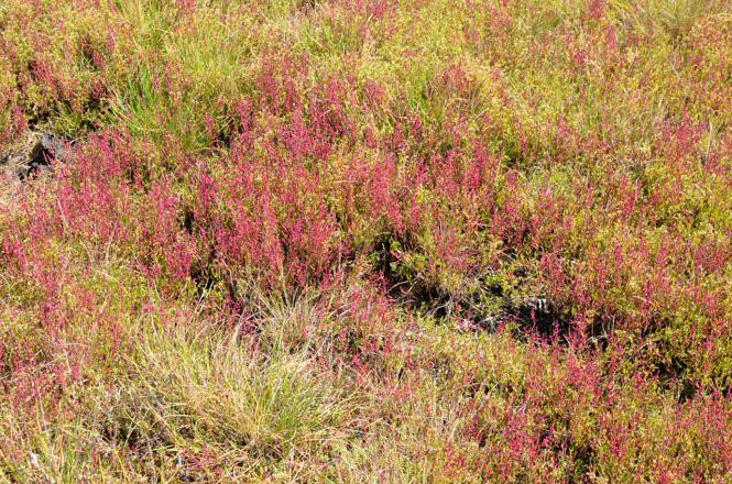 Coral Grass Colony of Wakka Primeval Flower Garden along Lake Saroma