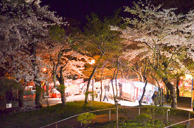 Cherry Blossom at Night on Hakodate Park