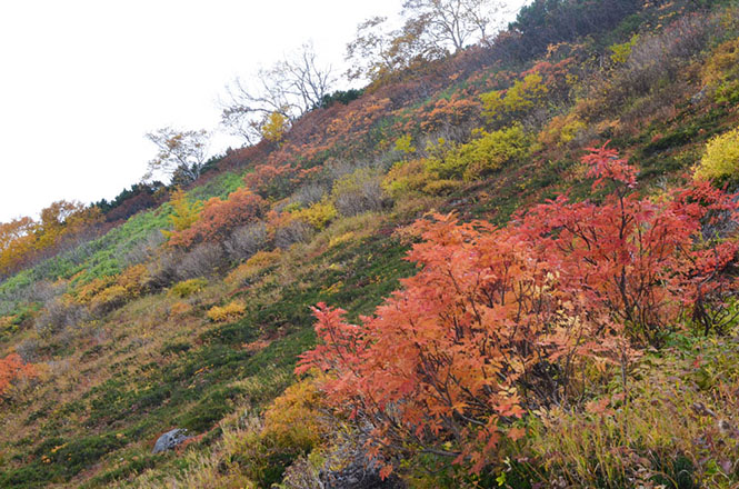 Ginsendai with Fall Foliage in Kamikawa