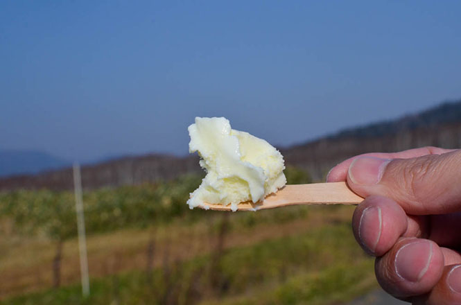Sheep Merry's Milk Ice Cream -Matsuyama Farm in Bifuka-