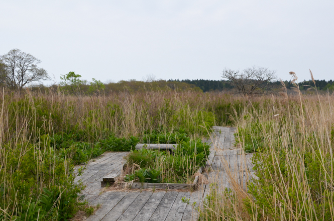 Kiritappu Wetland Center in Hamanaka