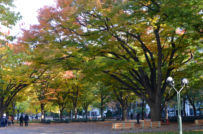 Odori Park with Fall Foliage in Sapporo