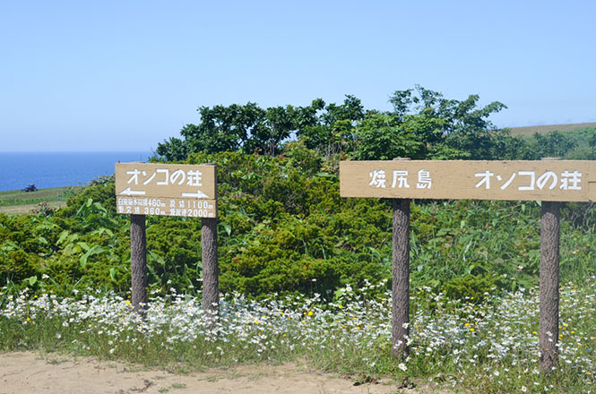 Onko-no-Sho Tree in Yagishiri Island