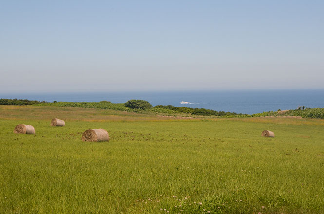 Sheep Ranch in Yagishiri Island