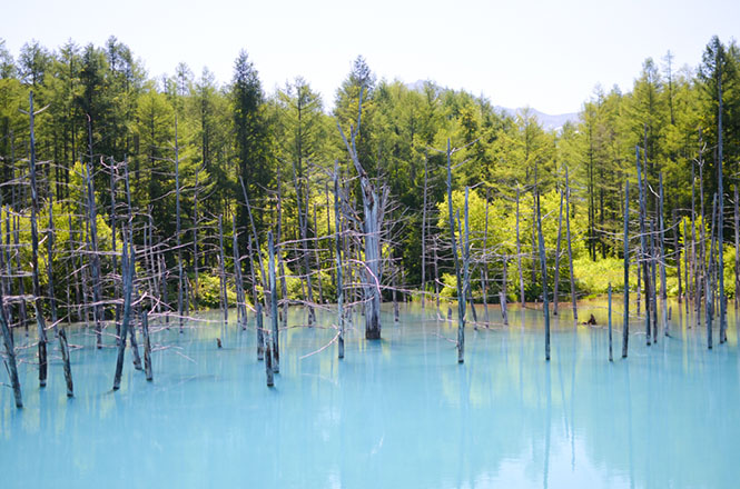 Biei Shirogane Area Blue Pond