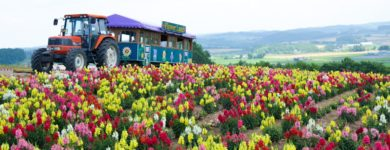 Flower Land Kami-furano