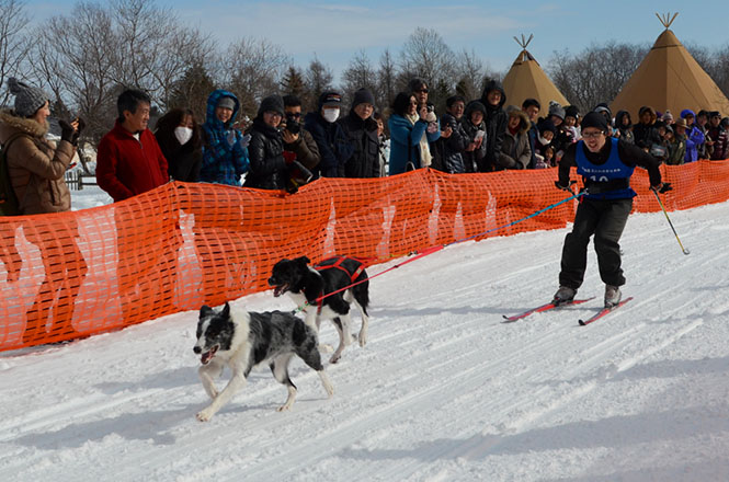 Sled Dog Racing in Eniwa