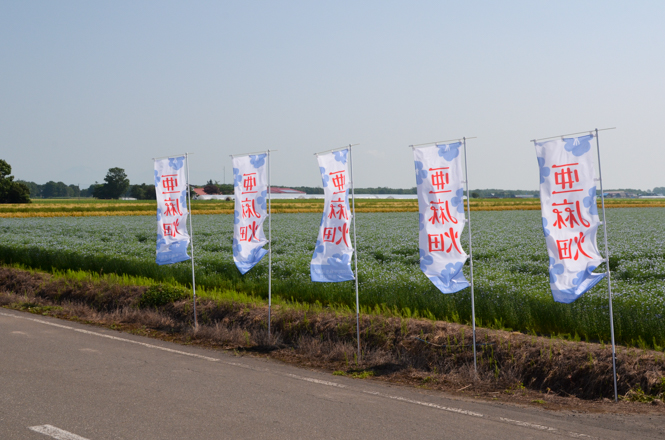 Flax Flowers in Tobetsu