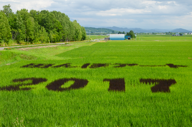 Rice Paddy Art in Asahikawa