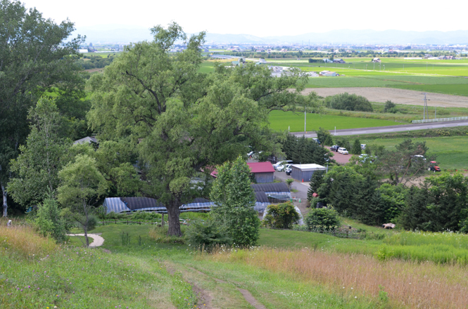 Ueno Farm in Asahikawa