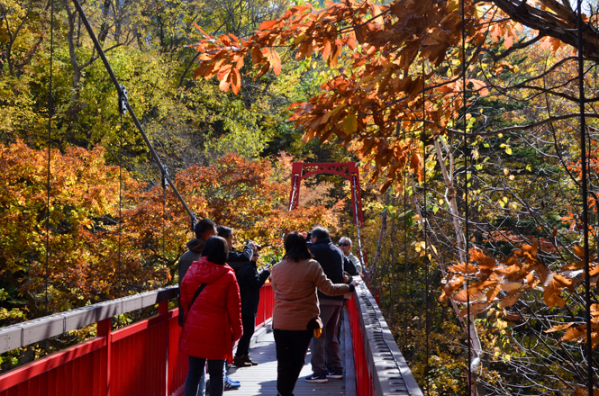 Fall Foliage around Futami Park and Futami Tsuribashi Suspension Bridge