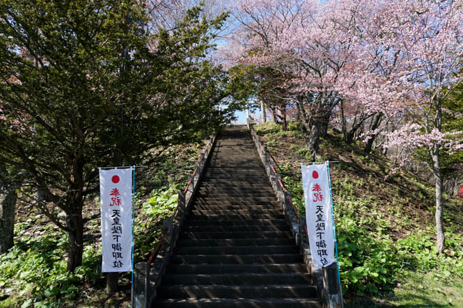 Cherry Blossoms of Akkeshi Shrine in Akkeshi
