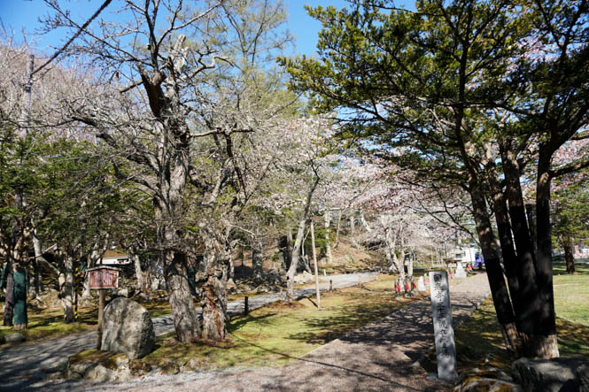 Cherry Blossoms of Kokutaiji Temple in Akkeshi